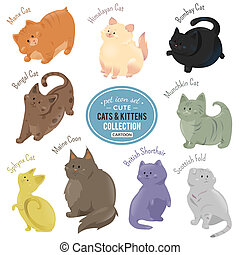 Cute cats and kittens depicting different fur color and...