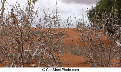 Dry desert thorny grass - Few drops of rain fall on dry...