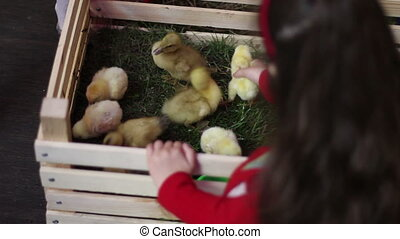 girl plays with ducklings in wooden box with decorative...