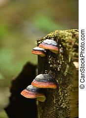 Orange mushrooms on a tree trunk