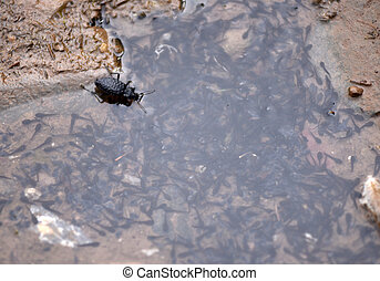 Insect eating frog spawns