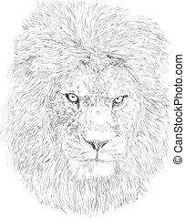 Lion head - Hand drawn lion head