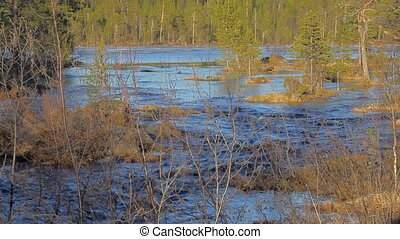 Spring flood in forest - crowded lake - Flooding of river in...