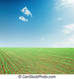agriculture green spring field and blue sky with clouds over it