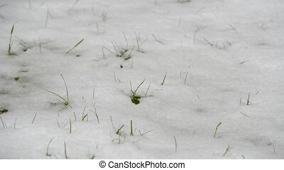 Snow melting revealing green grass
