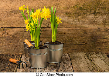 Daffodils on Rustic Background - Daffodils in metal...