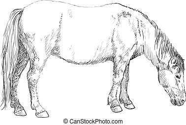 Horse grazing, sketch - Horse grazing, hand drawing...