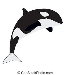 orca - killer whale vector illustration. great as logo...