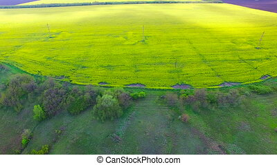 Flight over a field of oilseed rape