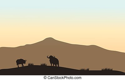 Beautiful silhouette of bull in hill