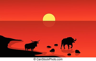 Silhouette of bull in lake