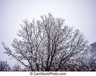 Snow Covered Decidous Tree - Snow covered tree against light...