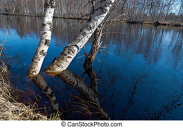 Spring flooding on the river - Russian landscapeSpring...