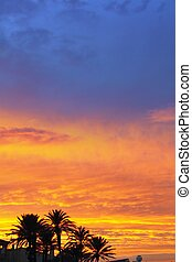 blue and orange red sunset palm trees - blue and orange red...
