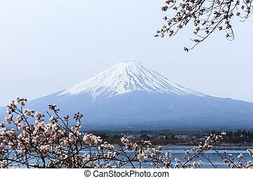 estación, monte, lago, Fuji, sakura, japón, mañana,...