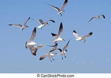 seagulls - flock of seagulls in the blue sky