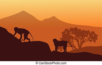 Silhouette of two monkey at the afternoon