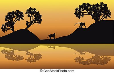 Silhouette of Monkey in lake at the sunrise