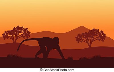 Silhouette of monkey in hills with mountain backgrounds