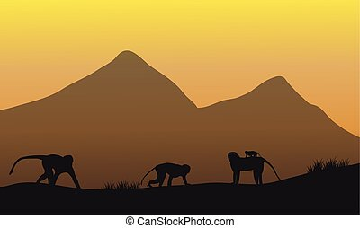 Silhouette of family monkey in the fields