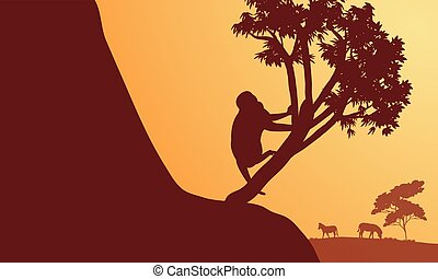 Silhouette of monkey and zebra in sunrise