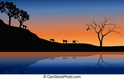 Family monkey in riverbank scenery at the sunset