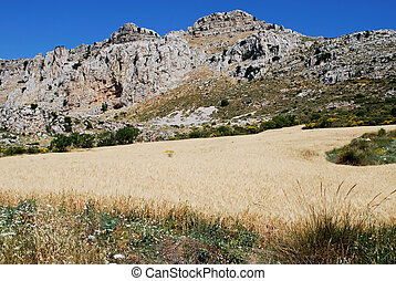 Karst Landscape, Antequera. - Wheat field on the edge of the...