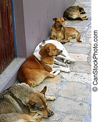 mexican street dogs lazy having a rest on the floor