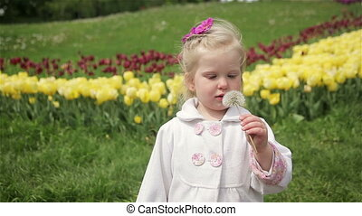 blowing a dandelion - little girl blond blowing a dandelion....