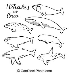 Whales and orca set Hand-drawn cartoon collection of sea...