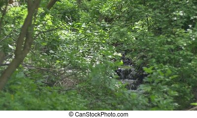 Spring in the Hardwood - Water stream if flowing rapidly...