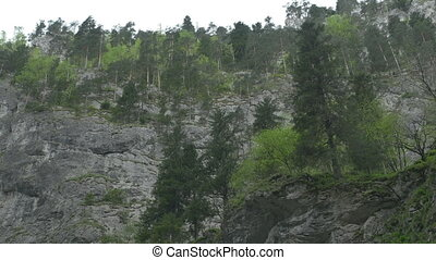 Fir Trees over Steep Mountain - Pan shot overa fir trees...