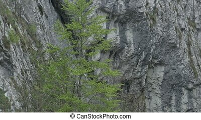 Steep Rocks and Trees - Close up pan shot of vegetation and...