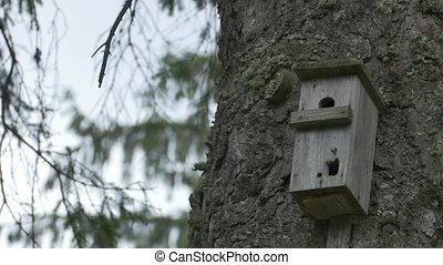 Bird Box on Forest Trunk - A little box for the wild birds,...