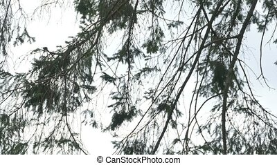 Fir Tree Bird Box - Pan shot to a small wood cage for wild...