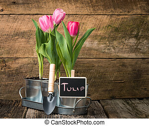 Tulips and Sign - Planter with pink tulips and a small chalk...