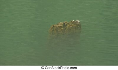 Tree Trunk in Lake - A tree trunk in the greenish lake ,...