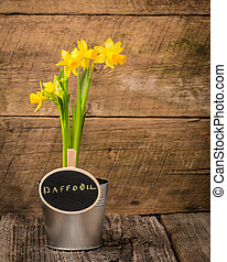 Daffodil and Sign - Potted spring daffodil with a chalk...