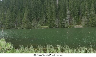 Lake in the Fir Forest - Pan shot to a greenish mountain...