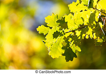 tree leaves in autumn
