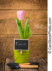 Tulip and Sign - Single potted tulip with a chalk board...