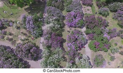Blooming lilac in Botanic garden Aerial view - Hryshko...