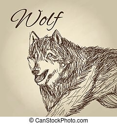 Wolf design Animal conceptWildlife animal, vector...
