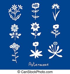 Asteraceae flowers set - Asteraceae vector stylized flowers...