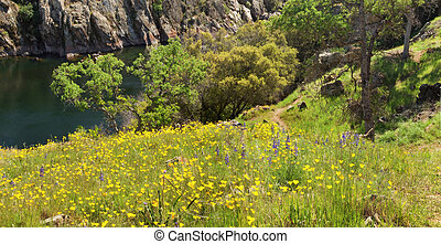 Hillside covered in poppies in Central California