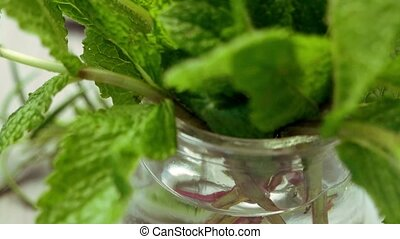 Mint leaves on a glass jar