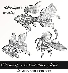 A collection or set of vector hand drawn goldfish in...