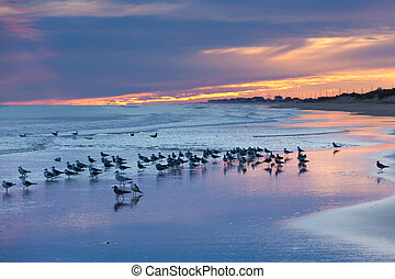 Sunset beach seagulls Outer Banks OBX NC USA - OBX Outer...