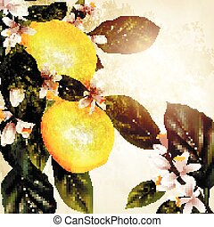Grunge vector background with blooming lemon in vintage...