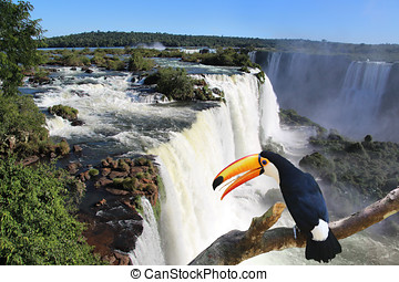 Iguazu Waterfall with a giant toucan bird in foreground